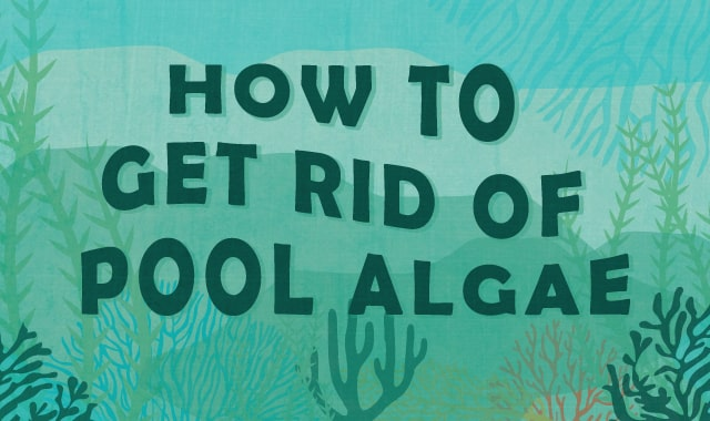 3 Easy Steps on How to Get Rid of Pool Algae