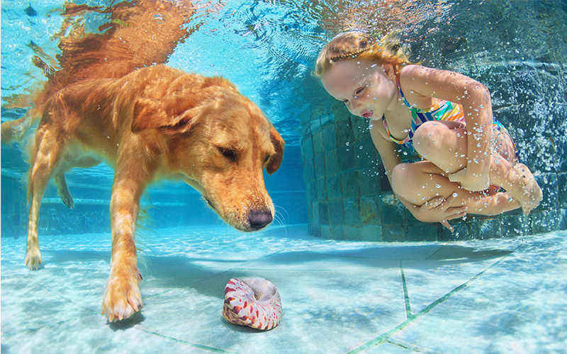 Benefits of Swimming For Your Dog